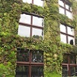 A photograph of a green wall in Paris, France